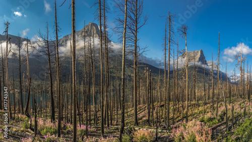 Valokuva  Burt out Woods Glacier National Park