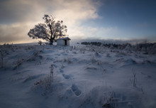 Hut By Tree In Snow Covered Field