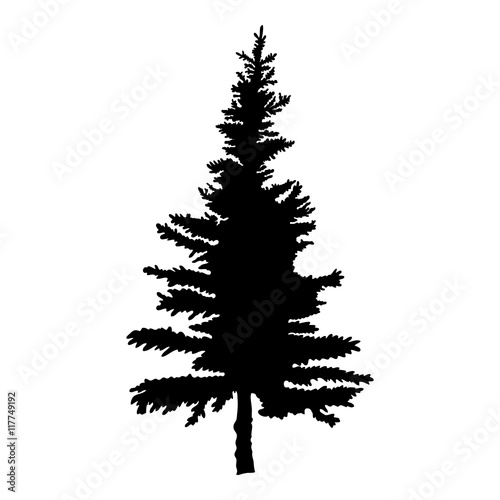 Fotografija  Pine tree isolated on white background, silhouette woods and fir tree for your design, isolated