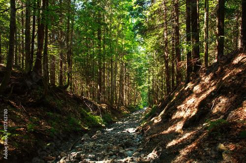 Gris traffic Broken erosion stone road in mountain green forest