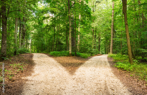 Aluminium Prints Road in forest Choose the way
