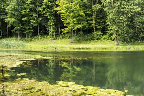 Fotografie, Obraz  Summer Pond Scenic