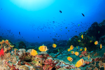 Fototapeta na wymiar Scuba dive. Coral reef underwater and female scuba diver