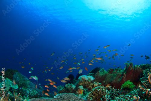 Papiers peints Recifs coralliens Coral reef underwater sea ocean