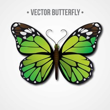 Green Realistic Butterfly