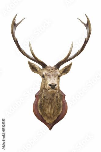 Deurstickers Hert Stuffed deer head.