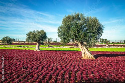 Colorful landscape in Puglia