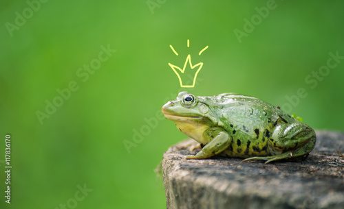 Poster Kikker Cute frog princess or prince. Toad painted crown, shooting outdoor