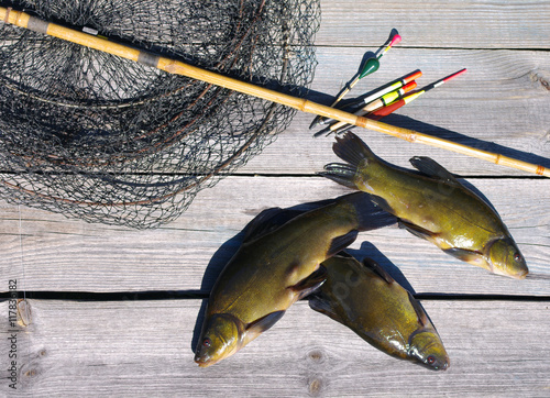 Three tenches, float, rod and a cage on a wooden surface (Tinca tinca) Canvas-taulu