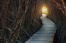 Walkways In To Forest