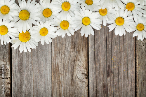 Foto auf Leinwand Blumen Daisy chamomile flowers on wood