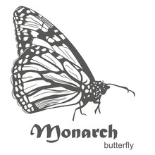 The Monarch Butterfly Danaus P...