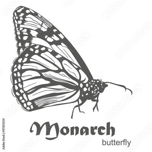 Fotografie, Obraz  The Monarch butterfly Danaus plexippus vector