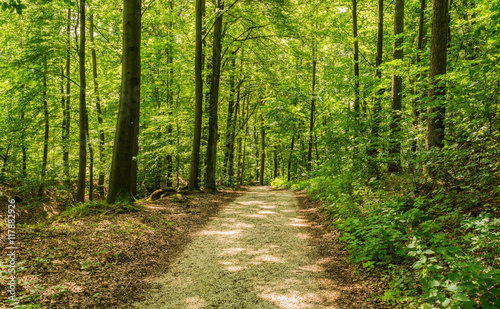 Fotobehang Weg in bos Forest track at summer