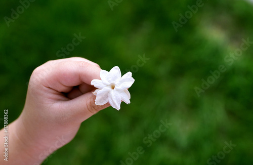 Young Asian Girl Hand Holding White Jasmine Flowers This Flower Is