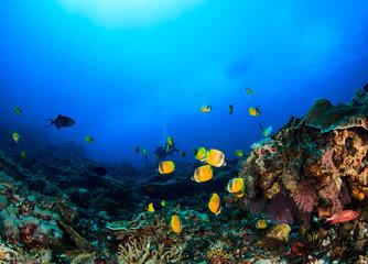 Fototapeta na wymiar Scuba dive coral reef