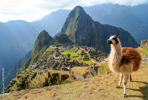 Canvas Prints Lama Lama And Machu Picchu