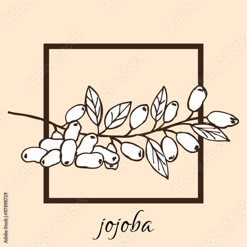 Fotografie, Obraz  hand drawn jojoba