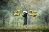 Kobieta Rolnicy uprawiają ryż w porze deszczowej. Nasączono je wodą i błotem, aby przygotować się do sadzenia. odczekaj trzy miesiące, aby zebrać plony - 117899593