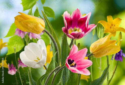 Obraz Obraz z kolorowymi tulipanami w ogrodzie - fototapety do salonu