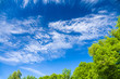 canvas print picture - Trees against blue sky with scenic clouds