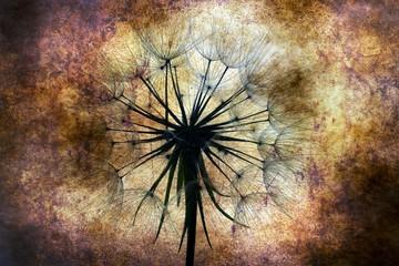 fototapeta dmuchawiec abstrakcja