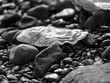 Dark Pebble Beach and White Oyster shell in Macro