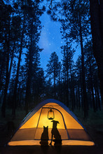 Dog And Cat Camping Under Stars