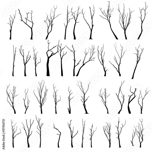 Fotomural Dead Tree without Leaves Vector Illustration Sketched