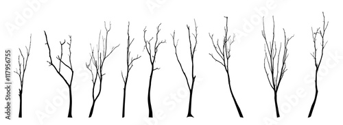 Stampa su Tela Dead Tree without Leaves Vector Illustration Sketched