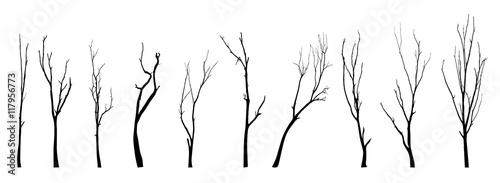 Fotografia, Obraz vector black silhouette of a bare tree