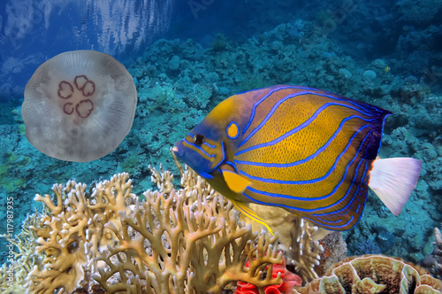 Fotografie, Obraz  Colorful coral reef with many fishes and sea turtle