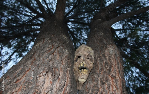 Photo  Creepy and Ominous Face Looking Through the Trees