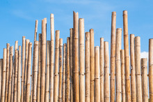 Beautiful Bamboo Fence With Blue Sky