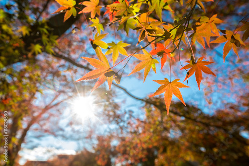 Photo  autumn Background
