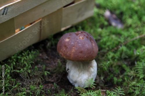 Mushroom picking basket Canvas Print