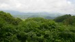 Panorama mountain woodland