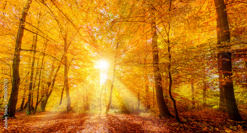 Papiers peints Forets Herbstlaub im Sonnenlicht