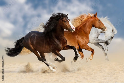 Fototapety, obrazy: Three horses run gallop  in dust
