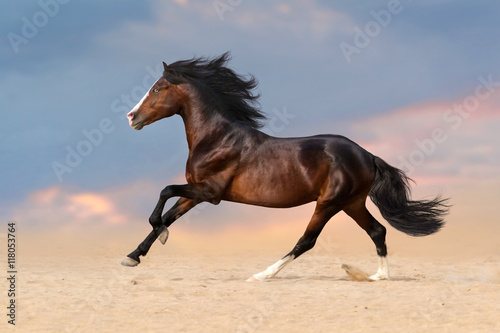 Wall Murals Photo of the day Bay horse with long mane run gallop in desert