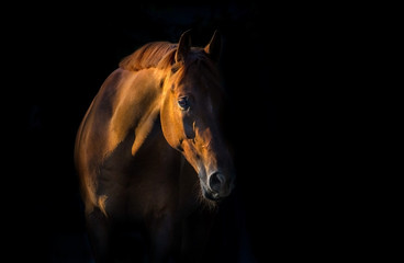 Red horse on black background