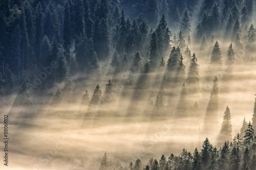 Garden Poster Forest coniferous forest in foggy mountains