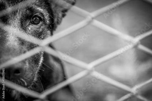 Fotografie, Obraz  Abandoned dog