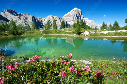 Staande foto Bergen Bergsee mit Blumen am Falzarego Pass, Limidessee