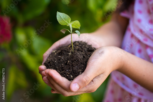 Foto op Aluminium Lente little girl with a tree sprout, tree sprout on hands