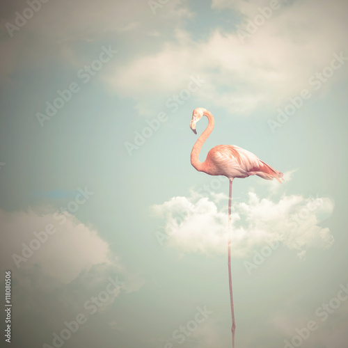 Flamingo with long legs on a cloudy sky background