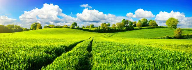 Ländliche Idylle, Panorama mit weiten grünen Wiesen und blauem Himmel