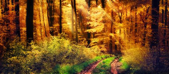 FototapetaSchöner Wald im Herbst, Lichtstrahlen fallen auf einen Waldweg