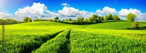 Wall Murals Meadow Ländliche Idylle, Panorama mit weiten grünen Wiesen und blauem Himmel