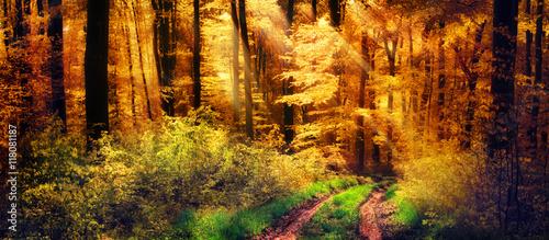 Foto op Canvas Herfst Schöner Wald im Herbst, Lichtstrahlen fallen auf einen Waldweg